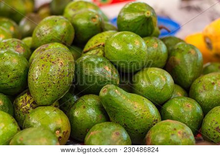 Exotic Tropical Fruit, Green Avocado Display For Sell In Market.selective Focus Shot. Image May Cont