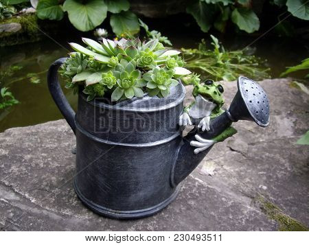Green Frog On The Grey Watering Can