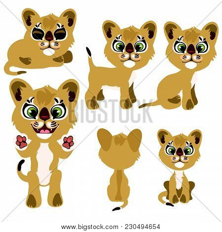 Set Small Cougars. Wild Animals. Vector Illustration.