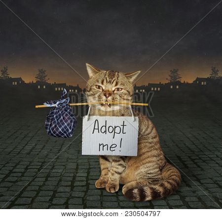 The Lonely Cat With A Sign Around His Neck Is On A Paved Road. It Says