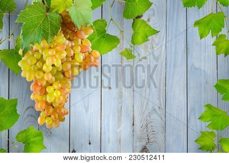 Bunch hanging grapes with green leaves against background light blue wooden wall made boards. Free space for text.