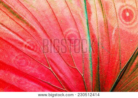 Detailed macro photo of a red tropical butterfly wing