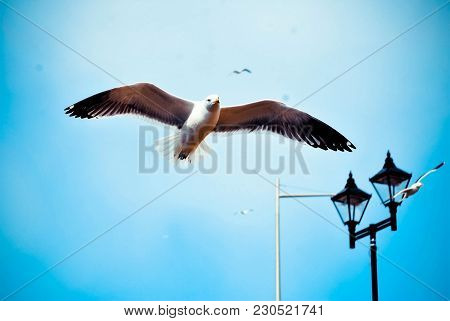 Bird Of The Seagull With A Wingspan. Shooting In Flight. White Seagull Close-up. Coast. Birds In The