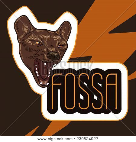 Poster With Head Of Aggressive Fossa. Madagascar Predatory Animal. Vector Illustration. Danger Conce