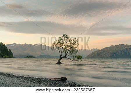 Alone Tree On Wanaka Water Lake With Mountain Background, New Zealand Natural Landscape