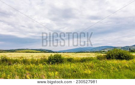 Wide Field In Rural Area On A Cloudy Day.  Lovely Nature Scenery In Summer