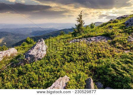 Small Spruce Tree Among The Rocks. Beautiful Scenery In Mountains At Sunrise