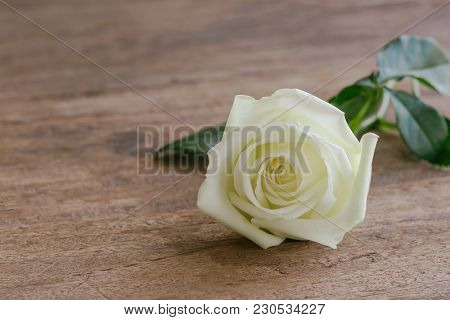 Beautiful Sweet White Rose On Wood Table With Copy Space In Close Up View. Romantic Gift Or Present