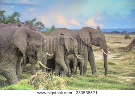 African Elephants With Baby On The Masai Mara Kenya Africa