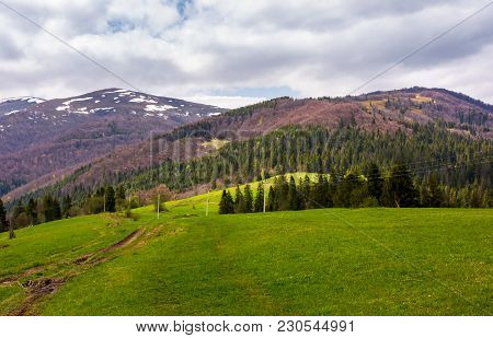 Lovely Mountainous Countryside In Springtime. Spruce Forest On Grassy Hills And Mountains With Snowy