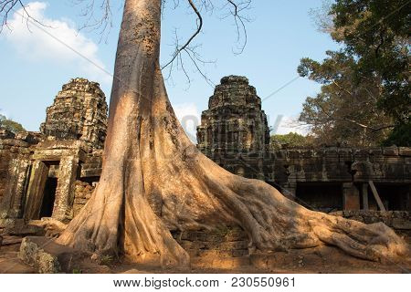 Huge Powerful Tree Covers Ancient Ruins Of Ta Promh Temple Ina Siem Riep, Cambodia