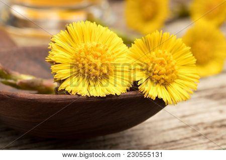 Fresh Coltsfoot (tussilago Farfara) Flowers On A Table