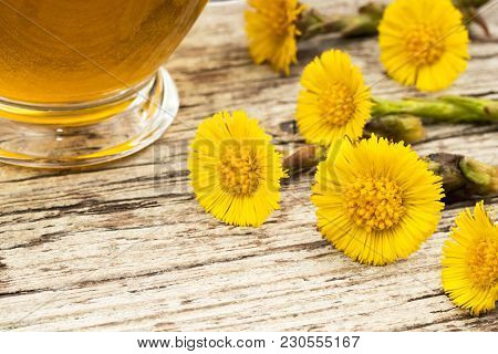Fresh Coltsfoot (tussilago Farfara) Flowers With Coltsfoot Tea On A Table
