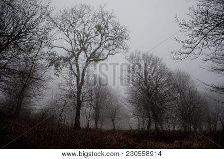 Landscape With Beautiful Fog In Forest On Hill Or Trail Through A Mysterious Winter Forest With Autu