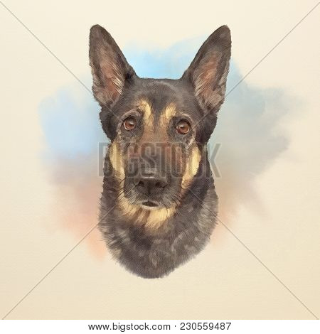 German Shepherd Dog, K-9 Dog. Working Dog Is A Dog That Is Trained Specifically To Assist Police And