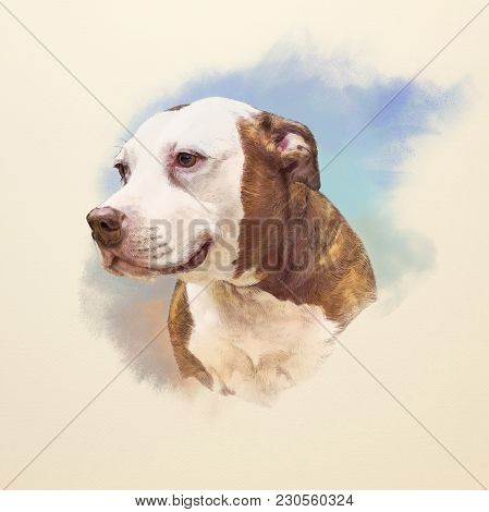 Watercolor Portrait Of American Staffordshire Terrier, A Medium-sized, Short-coated Dog Breed. Anima