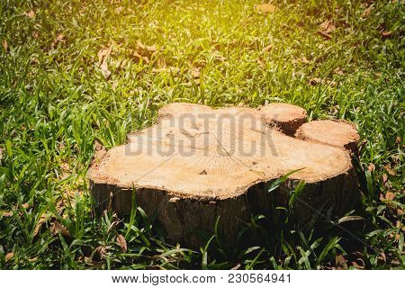 Old Tree Stump On Green Grass Field, Garden. The Stump Is Surrounded By Green Grass Field.