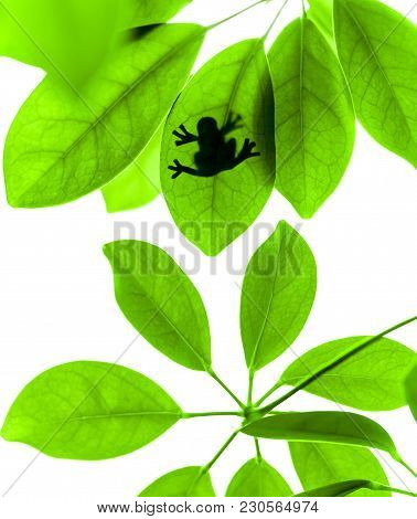 Frog On The Green Leaf Of The Jungle Plant