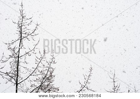 Snow Falling Against Trees And Sky  Background