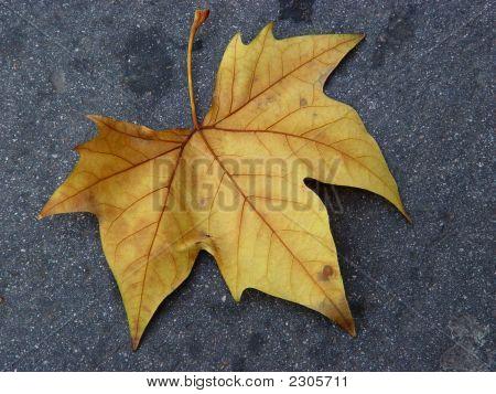 Autumn Leaf I
