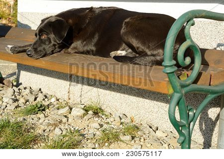 Dog Is Lying On Garden Bench