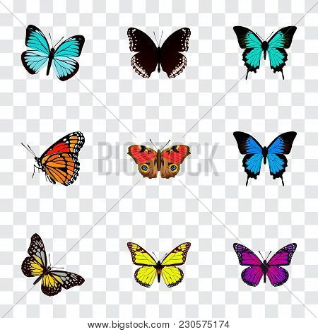 Set Of Butterfly Realistic Symbols With Precis Almana, Yello-wing, Demophoon And Other Icons For You