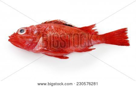 idiot fish isolated on white background