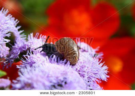 Snail In A Garden