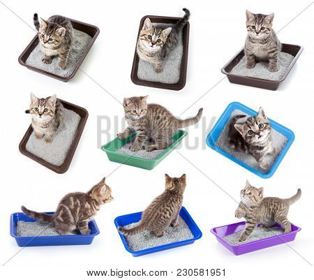 Cats top view sitting in litter box set isolated