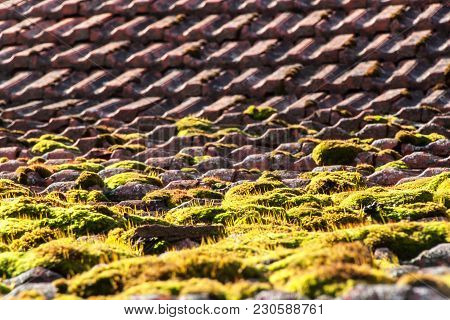 Moss On The Old Roof. Roof Tiles Overgrown With Green Moss. The Moss On The Roof
