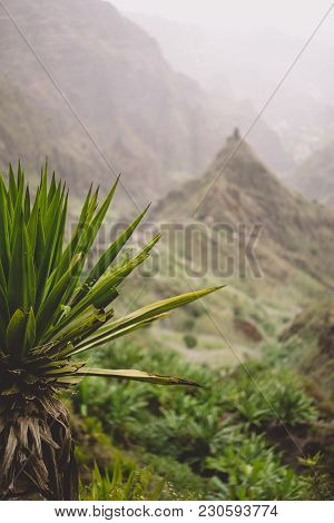 Agave Plants In Front Of Lombo De Pico Rock In Xo-xo Valley. Trekking Path Number 202 Over Rabo Curt
