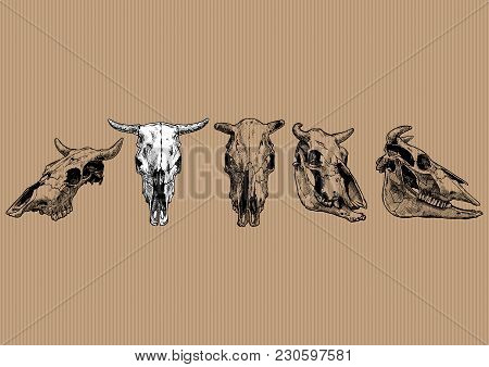 Vector Illustration Set Of Bull And Cow Skull Stylized As Engraving. Profile, Full Face And Three-qu
