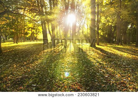 Beam Of Light Through Trees, Rays Of Sunlight In The Woods. Park Landscape