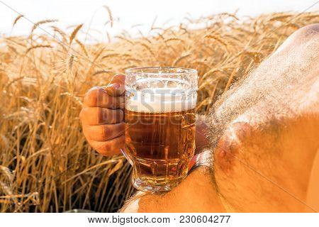 A Glass Of Beer Is Held By A Fat Man In The Background Of A Barley Field, A Glass Of Beer Standing O