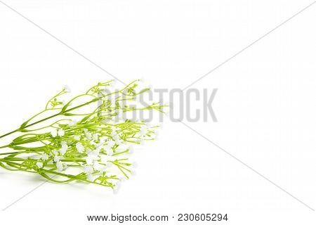 White Wild Flowers Isolated On White Background. Wildflowers.