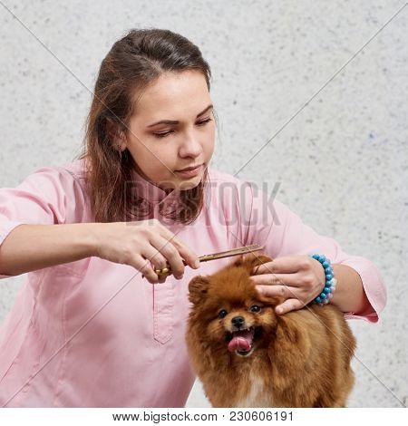 Cutting Dog's Toenail