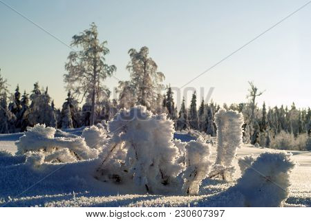 Icy Branches Of Bushes Stick Out Of Deep Snow Against The Background Of A Blurred Winter Forest Land
