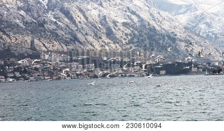 Seagull At The Coast Of Kotor Bay, Montenegro. Seagal Hovers Over The Pier