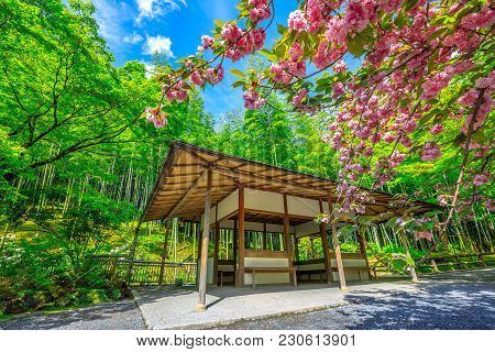 Garden With Cherry Blossom And Wooden Zen Architecture On North Side, North Gate, Of Tenryu-ji Zen T