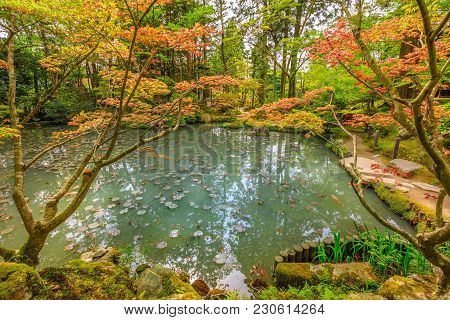 Red Maple Leaves And Large Carp In The Pond At Tenjuan Garden. Subtemple Of Nanzen-ji, At Zen Buddhi