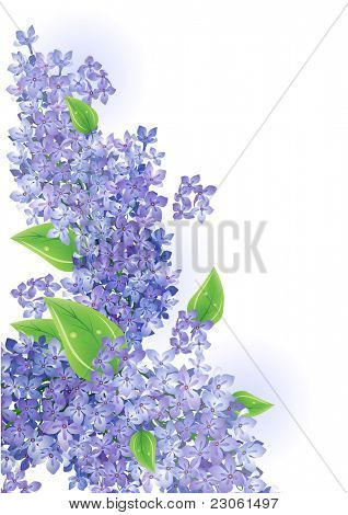 Lilac vector background