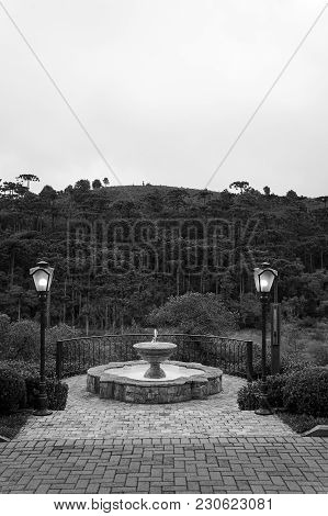 Fountain Terrace Chandelier Araucaria Woods Vegetation View Black White