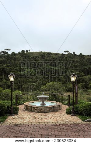 Fountain Terrace Chandelier Araucaria Woods Vegetation View