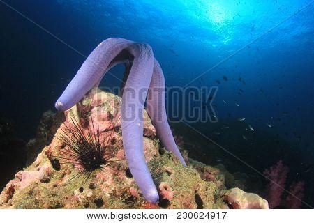 Blue starfish spawning
