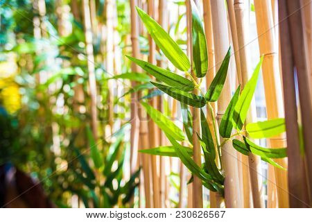 Young New Bamboo Leafs In Bamboo Forest