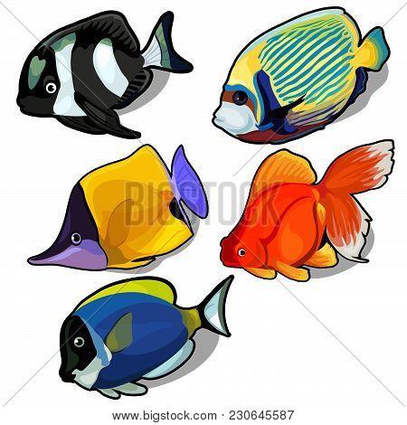 Set Of Exotic Sea Fish. Aquarium Fish. Vector Illustration.