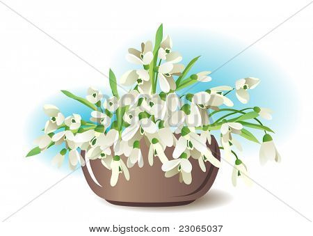 Snowdrops in vase isolated on white background. Raster version. Vector version is in my gallery