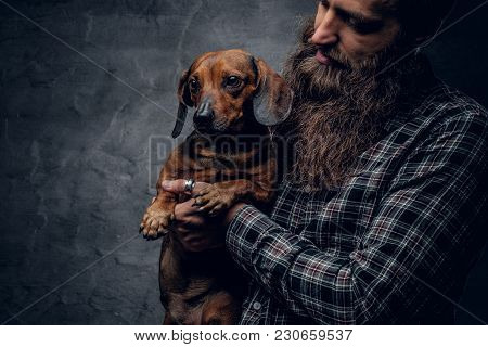 Bearded Hipster Male In A Blue Plaid Shirt Holds In Arms Brown Badger Dog.