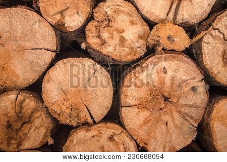Wood, Logs In The Warehouse Waiting For Processing