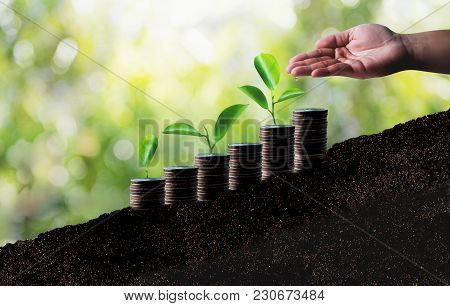 Growing Savings Coins Investment Growing Graph Business Development And Eco